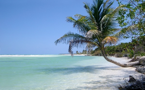 Idyllic tropical beach with crowns of palm trees overhanging golden beach sand and tranquil clear blue water in the ocean under a sunny blue summer sky